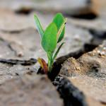 Meditazione del giorno: Crescita spirituale