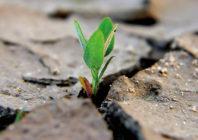 Crescita spirituale