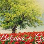 BALSAMO DI GALAAD