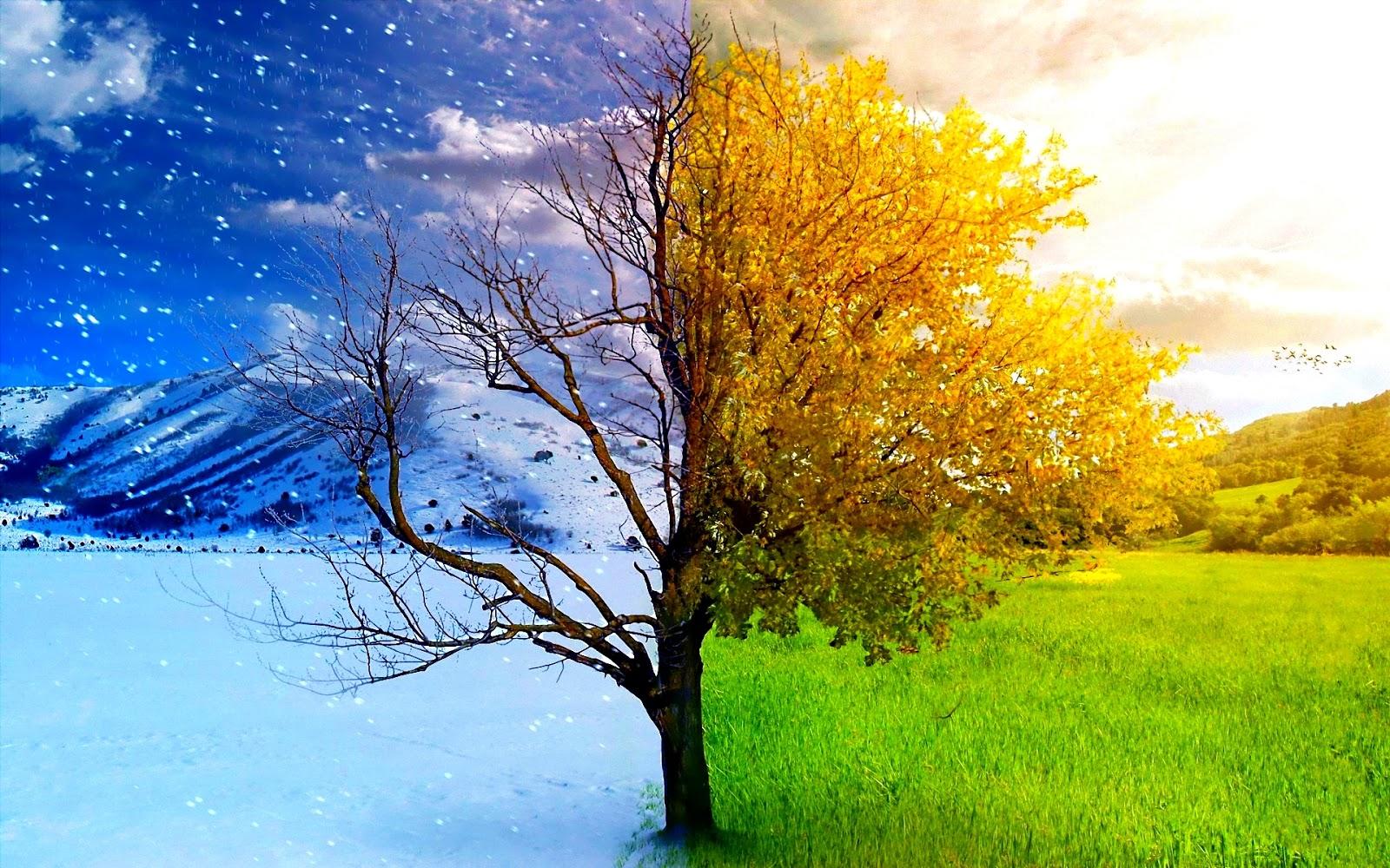 imágenes-bonitas-de-árboles-