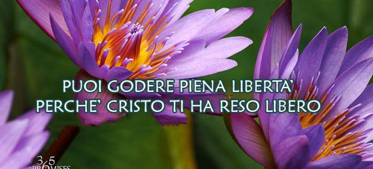 Puoi godere piena libertà, perché Cristo ti ha reso libero.